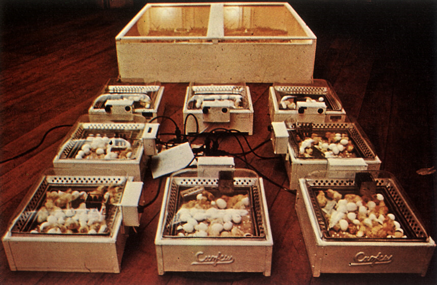 Hans Haacke, Chickens Hatching (1969), an example of systems art